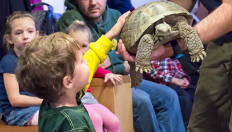 tortoise explore together high desert museum things to do in bend oregon