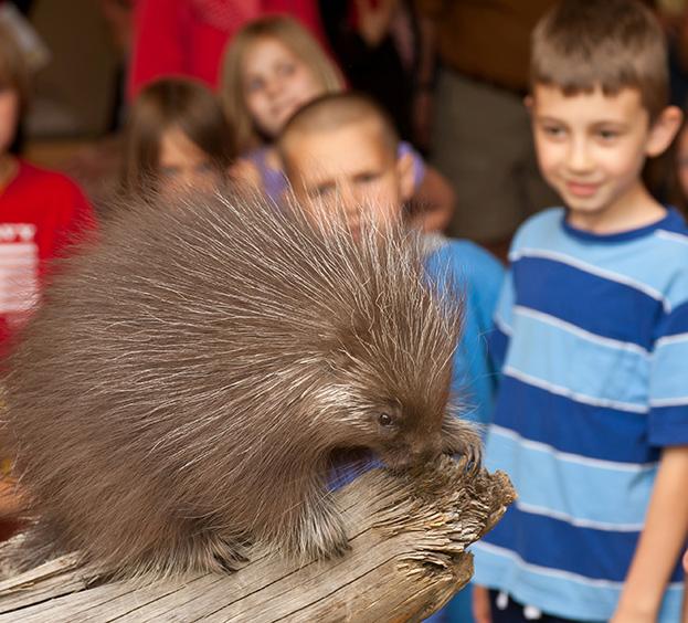 porcupine close encounters high desert museum visit bend oregon