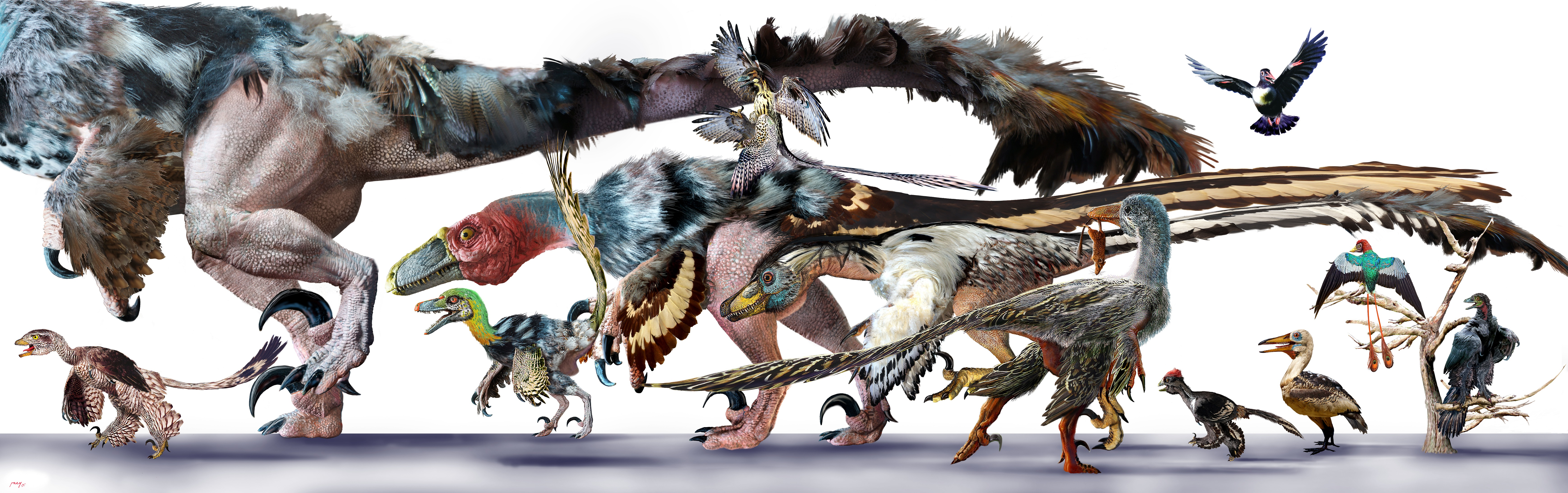 Dinosaurs Take Flight: The Art of Archaeopteryx