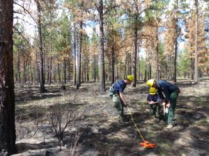 Ground fuels are measured after the Museum's prescribed burn to calculate what percentage was removed by the fire.
