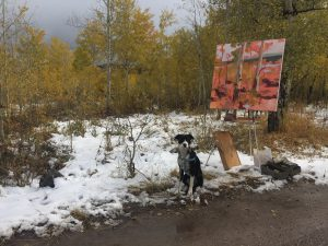 "Hadley Rampton's trusty companion, Phoebe, poses next to ""Teton Gold,"" painted in the Tetons."